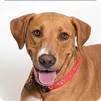 Adopt A Pet :: Tulane - San Luis Obispo, CA