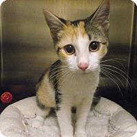 Adopt A Pet :: Winnie - Chambersburg, PA