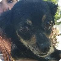 Adopt A Pet :: Charlotte - Aurora, CO