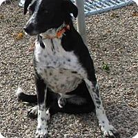 Adopt A Pet :: Dini - Clear Lake, IA