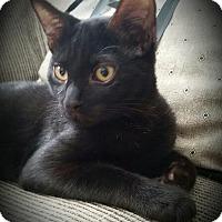 Adopt A Pet :: Klein - Staten Island, NY