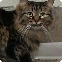 Adopt A Pet :: Georgie Courtesy Post - Absecon, NJ