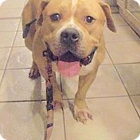 Adopt A Pet :: Chachi - Linden, NJ