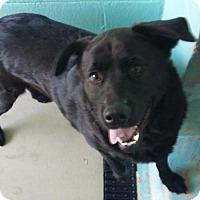 Adopt A Pet :: Wilma - Manteo, NC