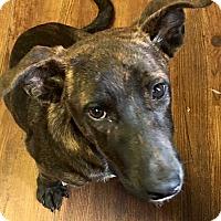 Adopt A Pet :: Jeffrey - Madisonville, TX