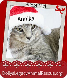 Domestic Shorthair Cat for adoption in Lincoln, Nebraska - ANNIKA