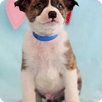 Adopt A Pet :: Kain - Waldorf, MD