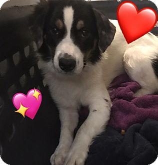 Tri County Collie Dog Rescue