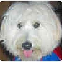 Adopt A Pet :: Dash - courtesy post - Scottsdale, AZ