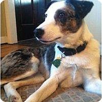 Adopt A Pet :: Berkley - Richmond, VA