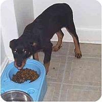 Adopt A Pet :: Zane - Chandler, IN