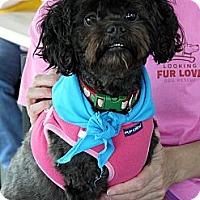 Adopt A Pet :: Raven - Baton Rouge, LA