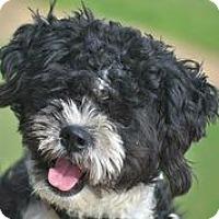 Adopt A Pet :: Aadison Piper - Austin, TX