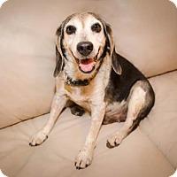 Adopt A Pet :: Sydney Boy - Phoenix, AZ