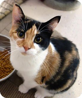 Calico Cat for adoption in McDonough, Georgia - Twiggy