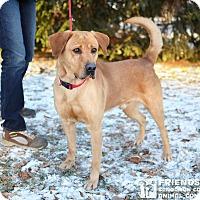 Adopt A Pet :: Gunner - Springfield, IL