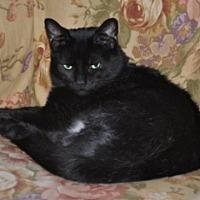 Adopt A Pet :: Luna - St. Charles, IL
