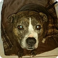 Adopt A Pet :: Remy- Courtesy Listing - Fredericksburg, VA