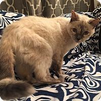 Adopt A Pet :: Belinda - Addison, IL