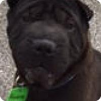 Adopt A Pet :: Maddox - Barnegat Light, NJ