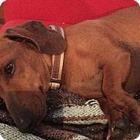 Adopt A Pet :: Tater Tot - Humble, TX