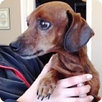 Adopt A Pet :: Buck Buckaroo - Houston, TX