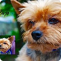 Adopt A Pet :: Cujo - Daleville, AL
