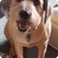 Adopt A Pet :: bailey - Red Lion, PA