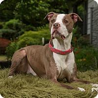 Adopt A Pet :: Hero - Salem, OR