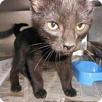 Adopt A Pet :: EZRA - Pittsburgh, PA