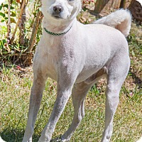 Adopt A Pet :: Westley - Pensacola, FL