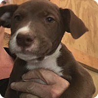 Adopt A Pet :: Casey-ADOPTION PENDING - Portsmouth, NH
