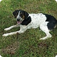 Adopt A Pet :: Anabel: Lockport KY - Cincinnati, OH