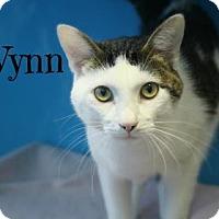 Adopt A Pet :: Wynn - West Des Moines, IA