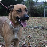 Adopt A Pet :: Samus - Conway, AR