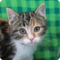 Adopt A Pet :: Teena - Lloydminster, AB