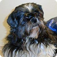 Adopt A Pet :: Marlene - Wildomar, CA