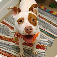Adopt A Pet :: Tea - Wilmington, DE