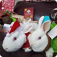 Adopt A Pet :: Ivory and Avery - Conshohocken, PA