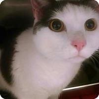 Adopt A Pet :: OZZY - Gloucester, VA