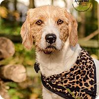 Adopt A Pet :: Hattie - Cincinnati, OH