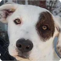 Adopt A Pet :: Leo - Arenas Valley, NM