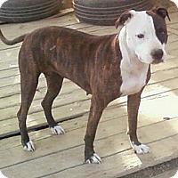 Adopt A Pet :: Spirit - Toledo, OH