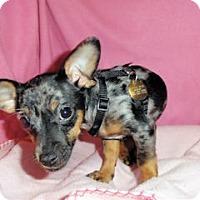 Adopt A Pet :: Melany - Mooy, AL