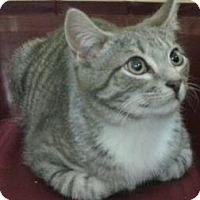 Adopt A Pet :: Nathan - Harrisburg, NC