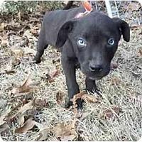 Adopt A Pet :: Sinatra - Adamsville, TN