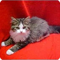 Adopt A Pet :: DEWDROP + DUCHESS - Germantown, MD