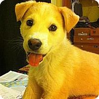 Adopt A Pet :: Fozzie - Saskatoon, SK