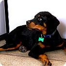 Adopt A Pet :: Kramer