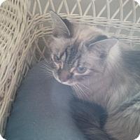 Adopt A Pet :: Melicent - Fairborn, OH